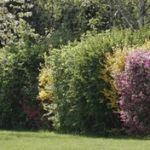 garden_hedge