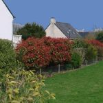 mixed_hedge