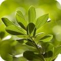piante3