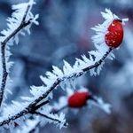 freezing-plant
