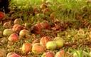 November-fruit-tree