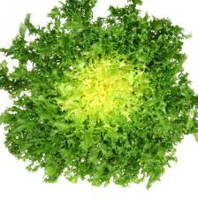 Curly endive, a salad with a subtle taste