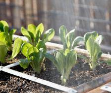 Preparing an organic square-foot vegetable patch