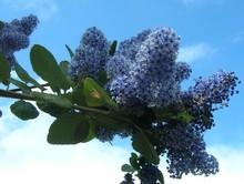 arbuste qui fleurit au printemps