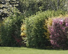 Hedges, great barriers against diseases