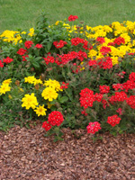 Mulch guidelines with plant-based mulch
