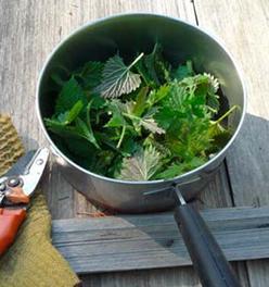 Organic treatments, most common fermented teas