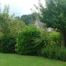 Set up a mixed hedge