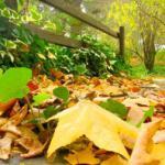 December gardening