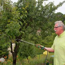Organic treatments for your fruit trees