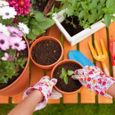 The complete guide to spending June in the garden
