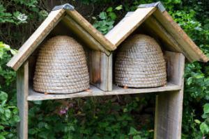 hive honeybees