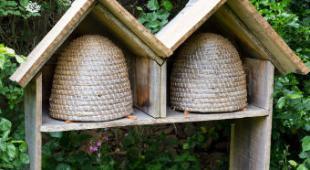 ruche abeilles ecolo