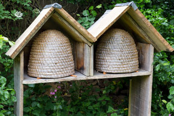An eco-friendly hive in the garden