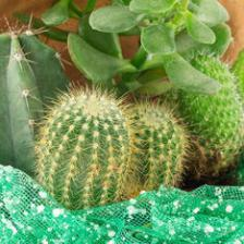 Cactus and succulents, 4 easy varieties to grow