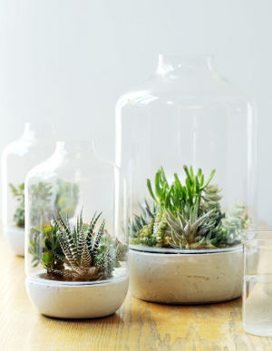 Succulents, delicious eye-candy!