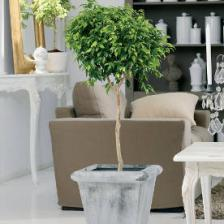 Easy plants for healthy indoor air
