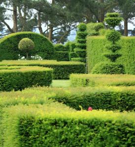 Jardin buis