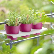 Grow herbs and spices