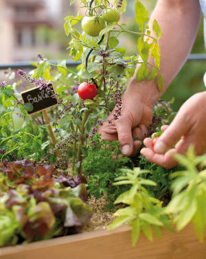 jardinage tendance et nouveauté
