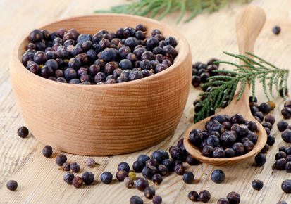 Juniper health benefits and therapeutic value