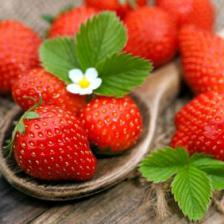 Strawberry health benefits and therapeutic value