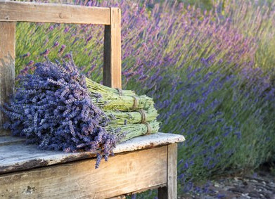 Lavender, a delicate fragrance of French Provence