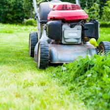 Renovating a lawn in spring
