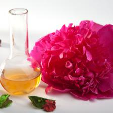 Peony health benefits and therapeutic value