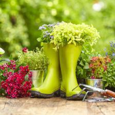 September to December, the gardener's calendar
