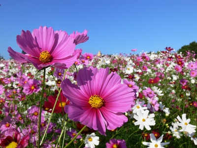 Cosmos, colors and light