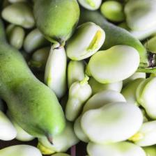 Broad beans, easy and quick to grow