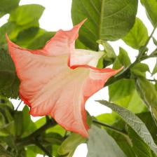 Datura tips and guidance for the best possible care