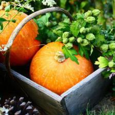 Fall, Autumn, the ideal season to prepare your garden