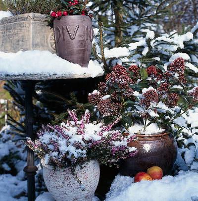 jardiniere hiver