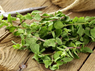Marjoram health benefits and therapeutic value