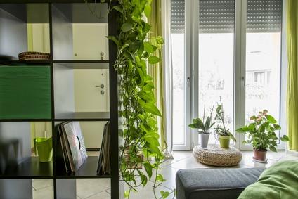 plantes par pièce
