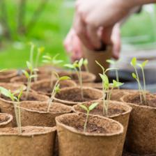 Sowing and seedling calendar for the vegetable patch