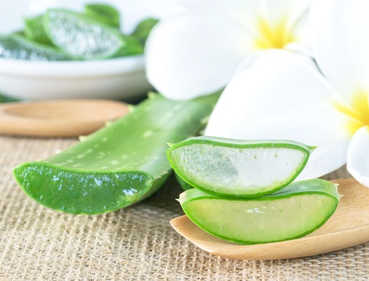 Aloe vera health benefits and therapeutic value