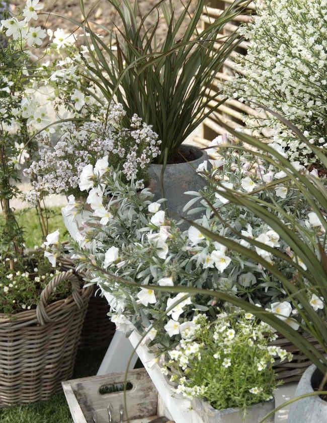 plante petit espace