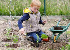 advice on gardening with children