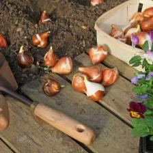 Planting and sowing in fall