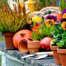 Fall garden tasks checklist