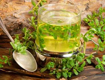 Bacopa health benefits and therapeutic value