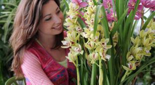 orchidee fleur