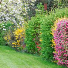Four-seasons hedge