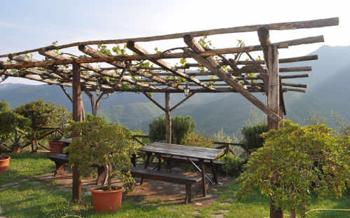 The poetic charm of a dressed pergola