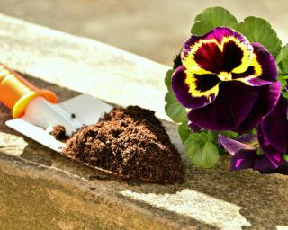Annuals like pansies can be planted in April.