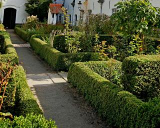 Hedges, shrubs and rose trees care and pruning in April.