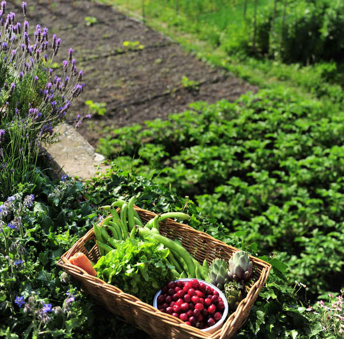 Companion planting, preparing the vegetable patch